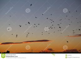 Birds In Flight At Sunset Stock PhotoImage: 52556634 1795