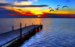 Download Birds flight in sunset High quality wallpaper 428