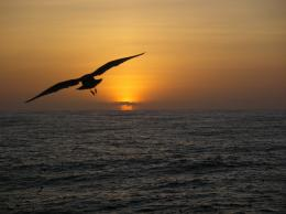 File:A sea bird observed flying towards the sunset during 2004 Pacifc 1927