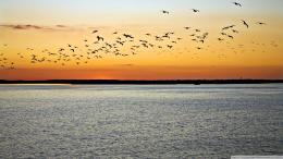 Birds In Flight Sunset Wallpaper 1920x1080 Birds, In, Flight, Sunset 1677