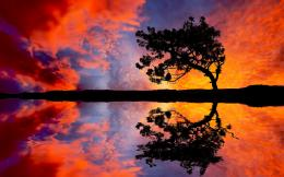 Tree Sunset Reflection Wallpapers Pictures Photos Images 503