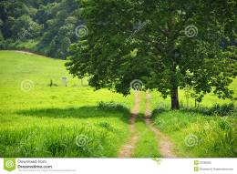 Countryside way path in summer 723