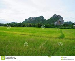 Rice field and path to mountains as part of a countryside 797