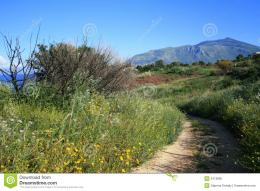 view of a small path through the Sicilian countryside in Italy 552