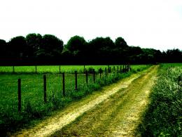 Countryside path nature tree green field:High Contrast 150