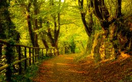 Path through the forest wallpaper1077129 935