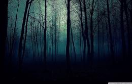 Dark Forest HD desktop wallpaper High Definition Fullscreen 638