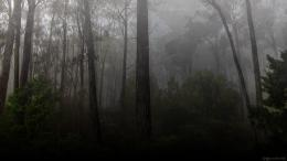 You can download Dark Forest Wallpaper Hd Pictures in your computer by 210