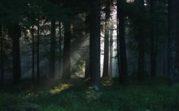 Best Dark Forest HDHD Wallpaper, get it now! 1715