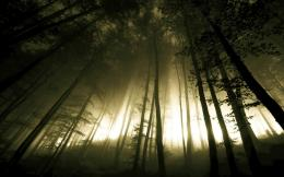 Dark Forest Fog Trees HD Wallpaper | Download HD Wallpapers 938
