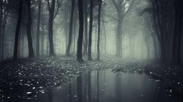 Creepy Dark Forest 1600 x 900 656