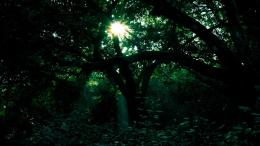 The Orchard | dark green forest wallpaper 7905 hd wallpapers 1612