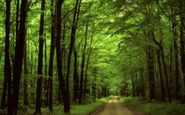 Beautiful Green Locations WallpapersGreen Dark Forest HD Photo 880