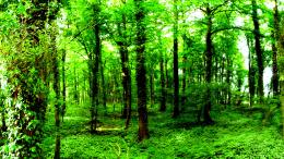 From free wallpapers nature wallpaper dark green forest wallpaper 1733