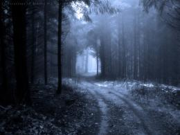 Dark Forest Backgrounds | wallpaper, wallpaper hd, background desktop 1744