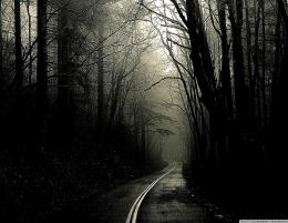 Dark Road Forest HD desktop wallpaper High Definition 484