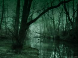 Dark Forest HD Wallpaper 324