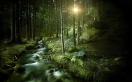 Dark forest wallpapers hd free 318822 | ImgStocks com 1780