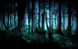 Dark Forest HD Wallpapers 465