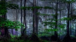 Nature trees dark forest mist HD Wallpaper 859