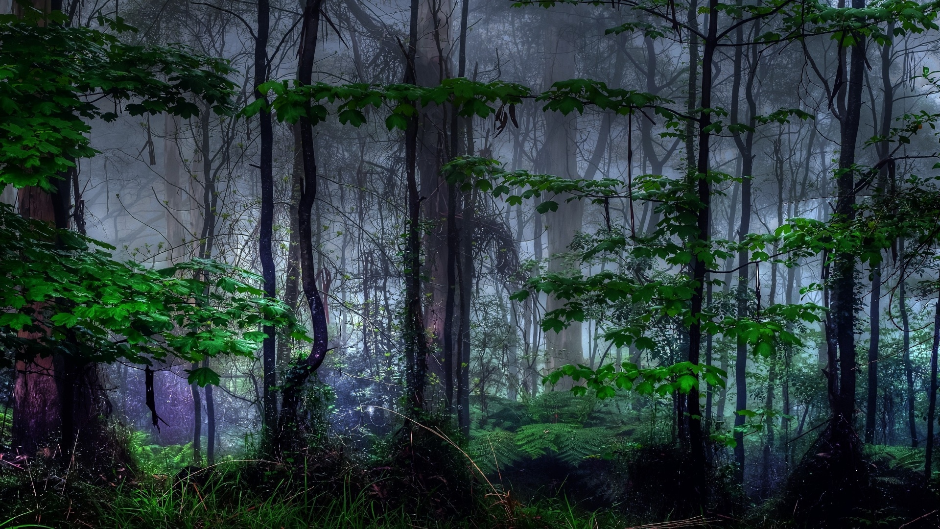 5 Nature Trees Dark Forest Mist Hd Wallpaper 859 Dark