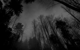 Dark Forest HD Wallpapers 180
