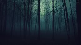 WallpapertagsDark Forest HD Tablet Smartphone Wallpaper # 1610