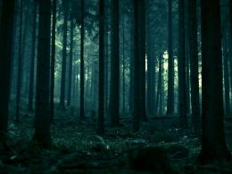 Dark Forest HD HD behang 1920x1080 1024x768 1930