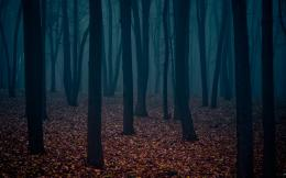 Dark Forest Wallpapers, wallpaper, Dark Forest Wallpapers hd wallpaper 819