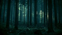 dark forest hd wallpaper tags 1920x1080 dark forest dark forest 1831