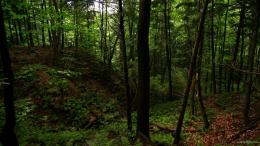 Green Forest With Waterfalls Hd Wallpapers Green Forest With | Model 1211