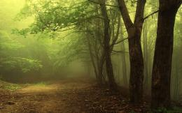 Forest Hd Dark1280x800 iWallHDWallpaper HD 710