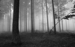 Dark Forest HD Wallpapers 667
