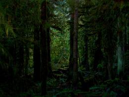 Dark forest wallpapers11 hd wallpapers fan full hd wallpapers 1080p 1709