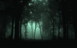 Dark Forest HD WallpapersHD Wallpapers Backgrounds of Your Choice 1165
