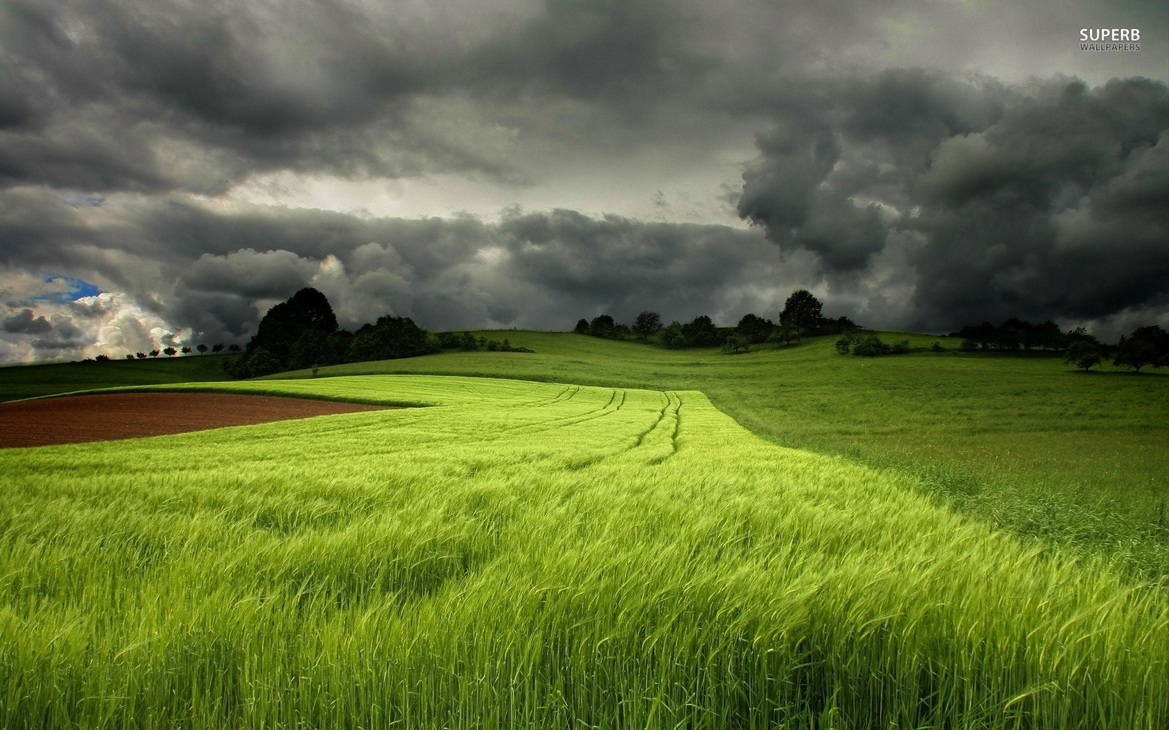 10 Storm Clouds Over A Field Of Green Wheat Wallpapers And