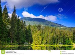 Pine Forest And Lake Near The Mountain Early In The Morning Royalty 540