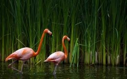 Casal De Flamingos HD wallpaper 2338x1563 1920x1200 1280x800 1024x768 950