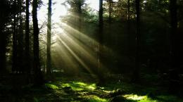 scenery photosDawn, the First Sunlight, the Dark Forest Will Soon 1012