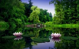 Lotus Flower Lake | 1440 x 900 | Download | Close 151