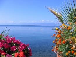 Description Ohrid lake flowers jpg 247
