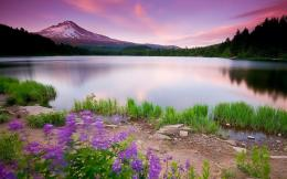 Flower Lake | 1280 x 800 | Download | Close 627