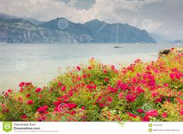 Flowers at Lake Garda 1066