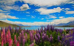 Lake Tekapo Flowers by Bobby01 on DeviantArt 411