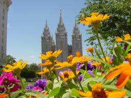 Description: Flowers on Temple Square grounds looking at the Salt Lake 446