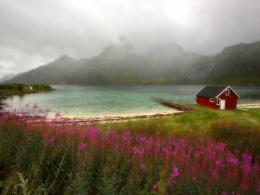 To Download Flowers And Lake wallpaper click on full size and then 1712