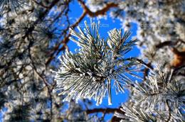 Winter branch of a fur treeThe Christm — Stock Photo © Mixerx 1063