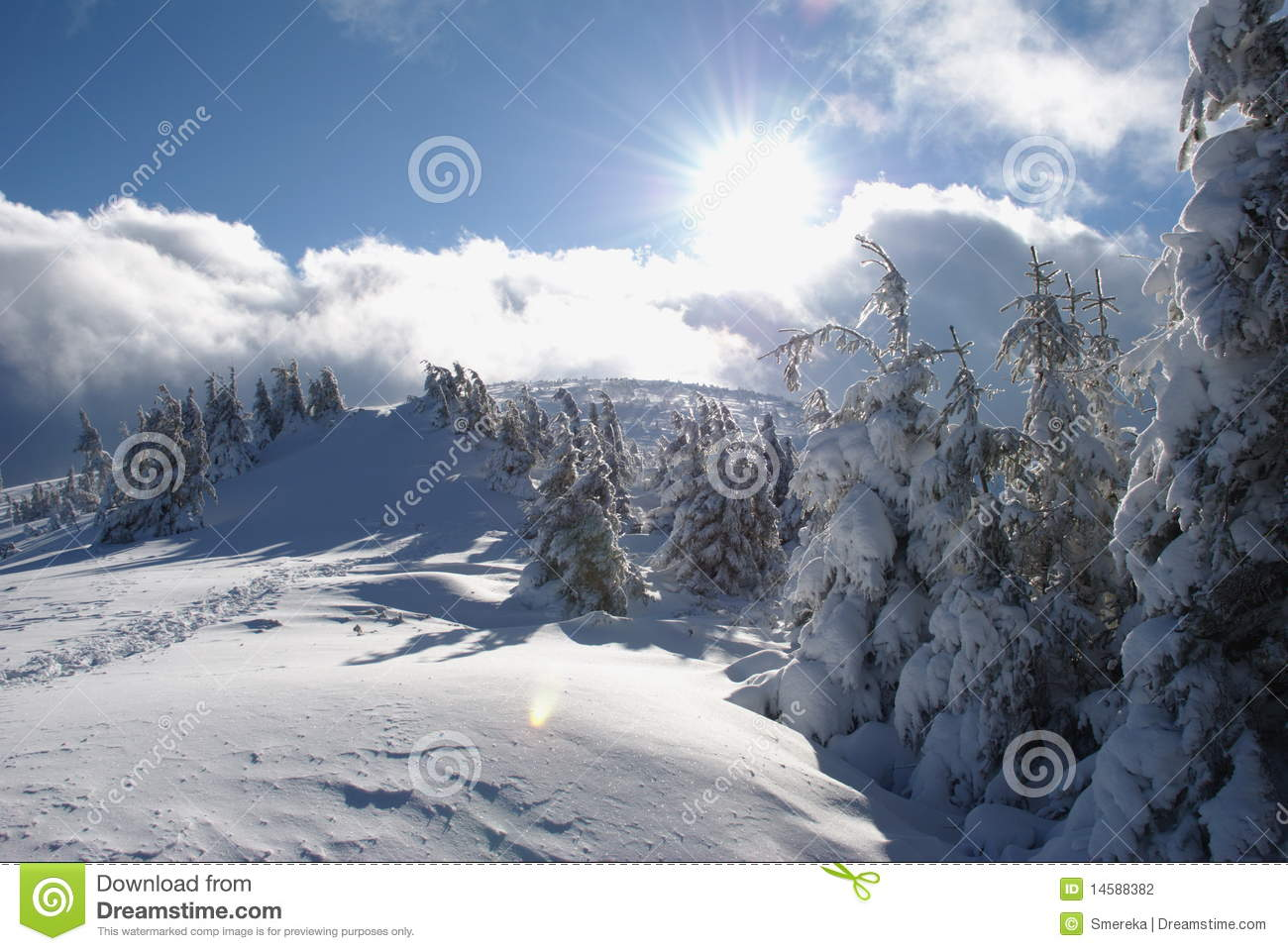 Fur trees On A HillsideStock PhotographyImage: 14588382 107