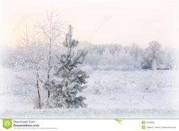 Fur tree In Winter Landscape Royalty Free Stock PhotoImage 888