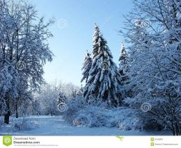 Winter Fur tree In Forest Royalty Free Stock PhotographyImage 1755